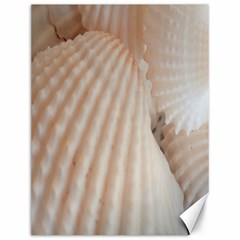 Sunny White Seashells Canvas 12  x 16  (Unframed)