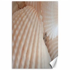 Sunny White Seashells Canvas 12  X 18  (unframed)