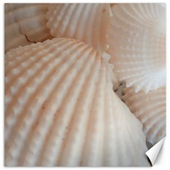 Sunny White Seashells Canvas 20  x 20  (Unframed)