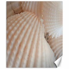 Sunny White Seashells Canvas 20  X 24  (unframed)