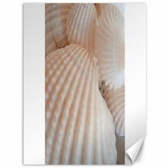Sunny White Seashells Canvas 36  x 48  (Unframed)