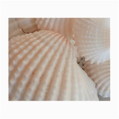 Sunny White Seashells Glasses Cloth (Small, Two Sided)