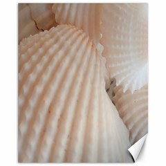 Sunny White Seashells Canvas 11  x 14  (Unframed)