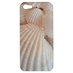 Sunny White Seashells Apple iPhone 5 Hardshell Case