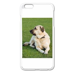 Anatolian Shepherd Laying Apple iPhone 6 Plus Enamel White Case