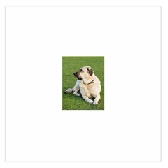 Anatolian Shepherd Laying Large Satin Scarf (Square)