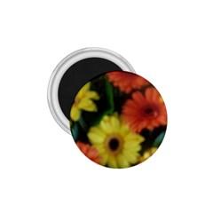 Orange Yellow Daisy Flowers Gerbera 1 75  Button Magnet