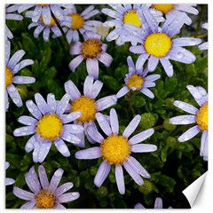 Yellow White Daisy Flowers Canvas 12  x 12  (Unframed)