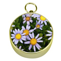 Yellow White Daisy Flowers Gold Compass