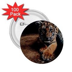 Photo  2 25  Button (100 Pack)
