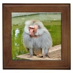 Grey Monkey Macaque Framed Ceramic Tile