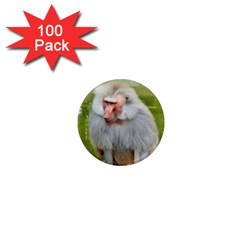 Grey Monkey Macaque 1  Mini Button Magnet (100 Pack)