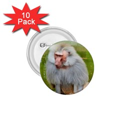 Grey Monkey Macaque 1 75  Button (10 Pack)