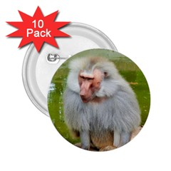 Grey Monkey Macaque 2 25  Button (10 Pack)