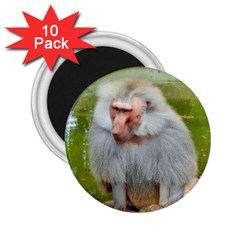 Grey Monkey Macaque 2 25  Button Magnet (10 Pack)