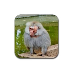 Grey Monkey Macaque Drink Coasters 4 Pack (square)