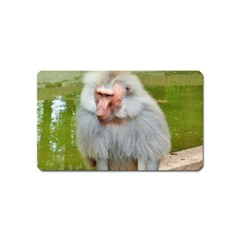 Grey Monkey Macaque Magnet (name Card)
