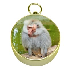 Grey Monkey Macaque Gold Compass