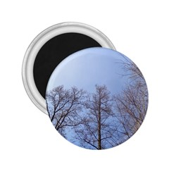Large Trees In Sky 2 25  Button Magnet