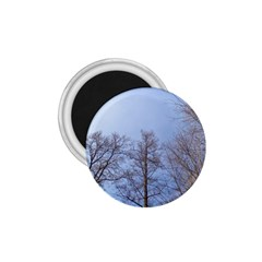 Large Trees In Sky 1 75  Button Magnet