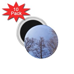Large Trees In Sky 1 75  Button Magnet (10 Pack)