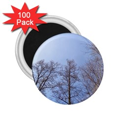 Large Trees In Sky 2 25  Button Magnet (100 Pack)