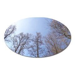 Large Trees In Sky Magnet (oval)