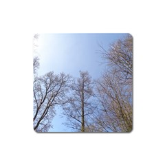 Large Trees In Sky Magnet (square)