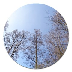 Large Trees In Sky Magnet 5  (round)