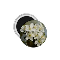 Spring Flowers 1 75  Button Magnet