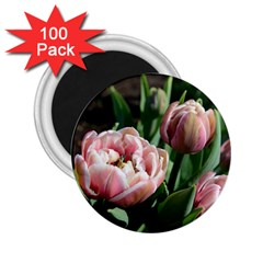 Tulips 2 25  Button Magnet (100 Pack)