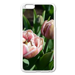 Tulips Apple iPhone 6 Plus Enamel White Case