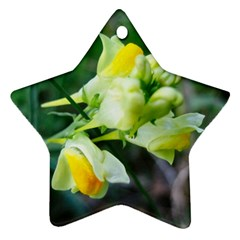 Linaria Flower Star Ornament