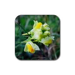 Linaria Flower Drink Coasters 4 Pack (square)