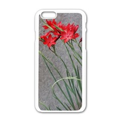 Red Flowers Apple Iphone 6 White Enamel Case