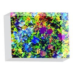 The Neon Garden 5 x 7  Acrylic Photo Blocks