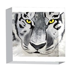 The Eye Of The Tiger 5  x 5  Acrylic Photo Blocks