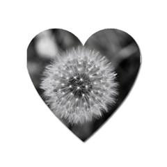 Modern Daffodil Seed Bloom Heart Magnet