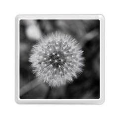 Modern Daffodil Seed Bloom Memory Card Reader (Square)