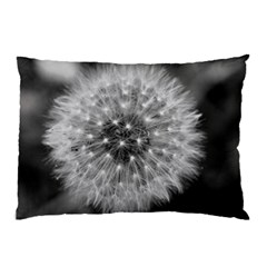 Modern Daffodil Seed Bloom Pillow Cases (Two Sides)