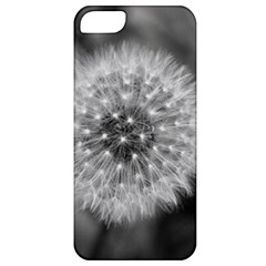 Modern Daffodil Seed Bloom Apple Iphone 5 Classic Hardshell Case