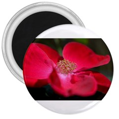 Bright Red Rose 3  Magnets