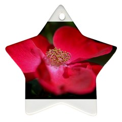 Bright Red Rose Ornament (star)