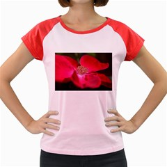 Bright Red Rose Women s Cap Sleeve T-Shirt