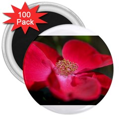 Bright Red Rose 3  Magnets (100 Pack)