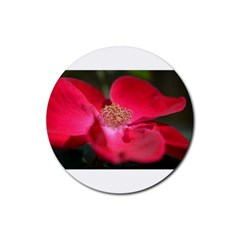 Bright Red Rose Rubber Round Coaster (4 Pack)