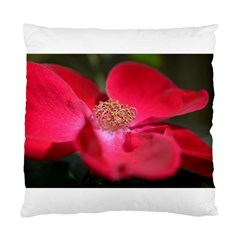 Bright Red Rose Standard Cushion Cases (two Sides)