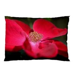 Bright Red Rose Pillow Cases