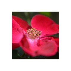Bright Red Rose 5 5  X 8 5  Notebooks