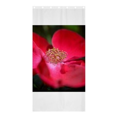 Bright Red Rose Shower Curtain 36  x 72  (Stall)